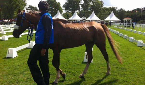 La discipline de l'endurance est au c½ur d'une polémique après la mort suspecte d'un cheval à Compiègne (60), en mai dernier. A quelques jours des Jeux Equestres Mondiaux, qui se tiendront en Normandie du 23 août au 7 septembre 2014, la Fondation 30 Millions d'Amis appelle à une meilleure prise en compte du bien-être du cheval.