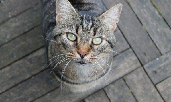 17 chats laissés sans soins ni nourriture ont été confiés à la Fondation 30 Millions d'Amis près de Vannes (56). La Fondation, qui a porté plainte pour abandon, lance un appel à adoption.