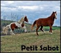 Photo de forum-petit-sabot