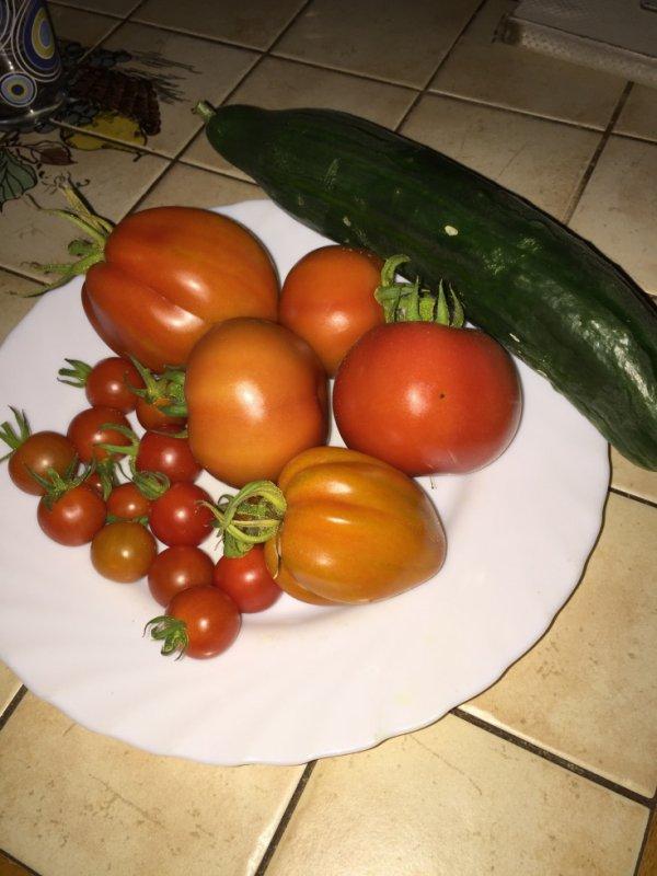 ma récolte du jour 18.08.2016