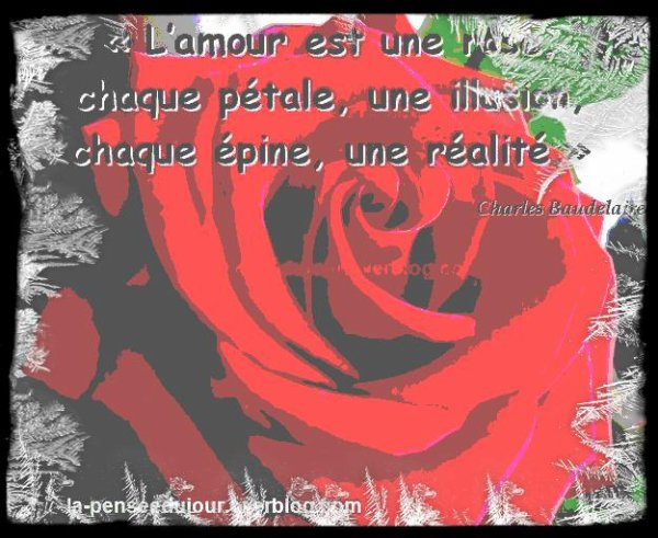 Chapitre 38 : Ma Rose