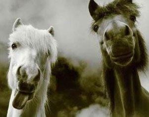 Essayez de laisser un cavalier sans son cheval, il lui manque une partie de lui-meme.