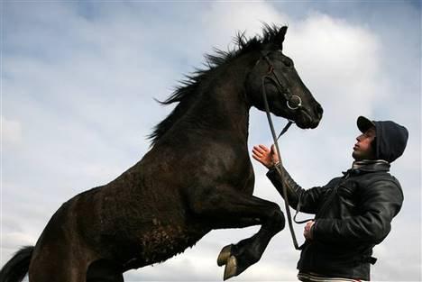 Il n'y a pas de mauvais chevaux par contre il y a des mauvais cavalier.