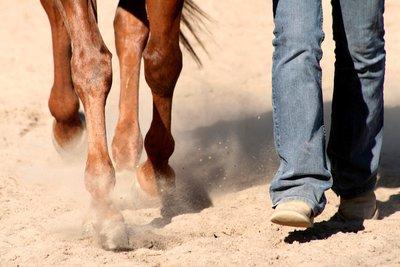 L'équitation est le seul sport individuel qui se pratiquent a deux.