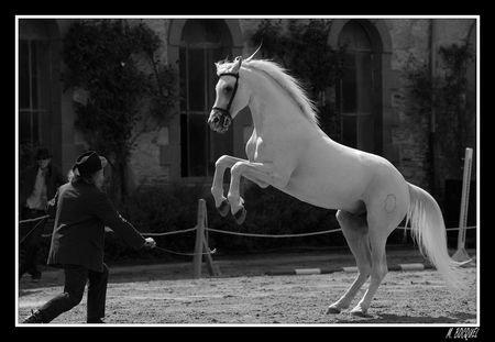 L'homme n'aura jamais la perfection du cheval.