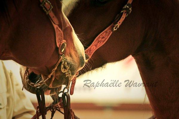 De feu, d'ivoire ou d'ébène, les chevaux galoperont toujours furieusement dans notre imaginaire.