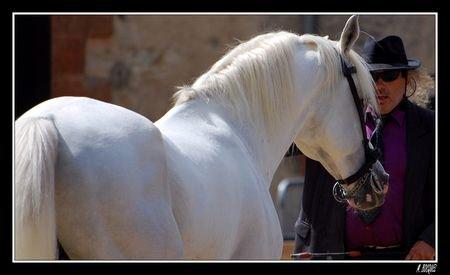 Le cheval, comme chacun sait, est la partie la plus importante du cavalier.
