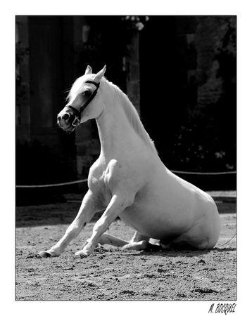On ne prête pas son cheval car prêter son cheval c'est comme prêter une partie de soi.