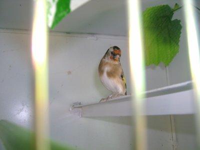 mes cages pour saison 2011