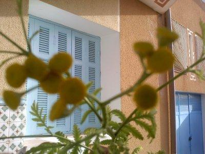 nouvelles photos des fleures de tanaisie