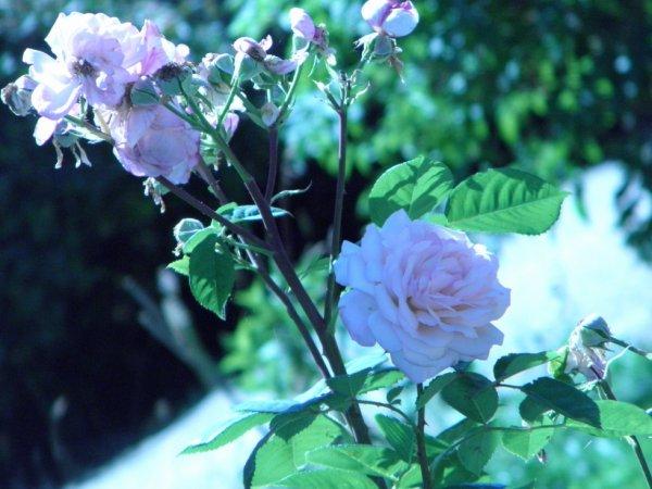 fleur solitaire