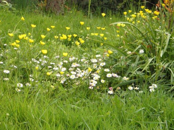 milliers de fleurs