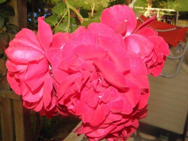 des roses pour toi/pour vous