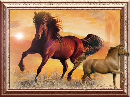 cheval cadre