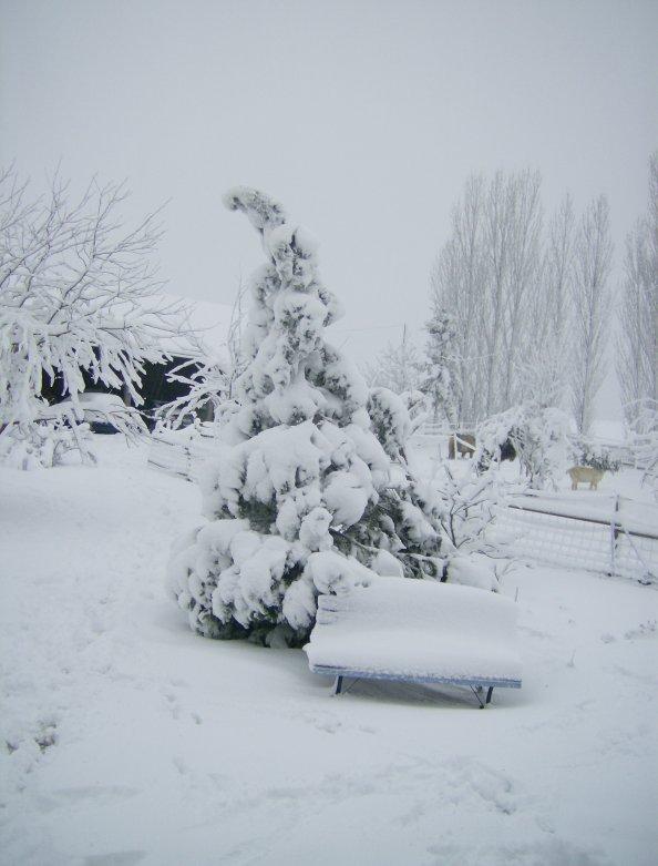 le loiret sous la neige !!!...