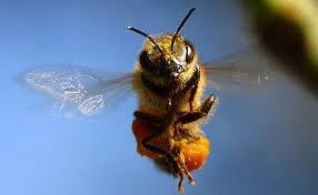 Ce qui n'est point utile à l'essaim, n'est point utile à l'abeille.  (Montesquieu)
