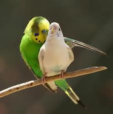 """"""" C'est ici mon commandement : Aimez-vous les uns les autres, comme je vous ai aimés. Il n'y a pas de plus grand amour que de donner sa vie pour ses amis.Vous êtes mes amis, si vous faites ce que je vous commande."""""""