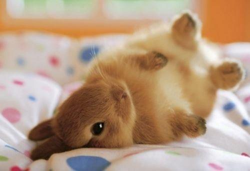 Les bonnes et mauvaises raison d'avoir un lapin ♡