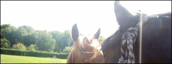- Les plus beau de tout les chevaux, le mien, les siens (..)