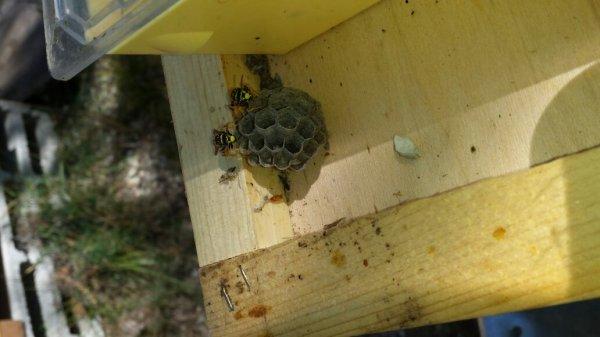 Des locataires dans les ruches