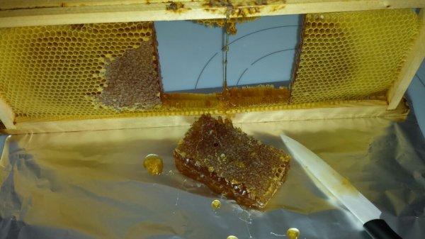 petit gâteau de miel..