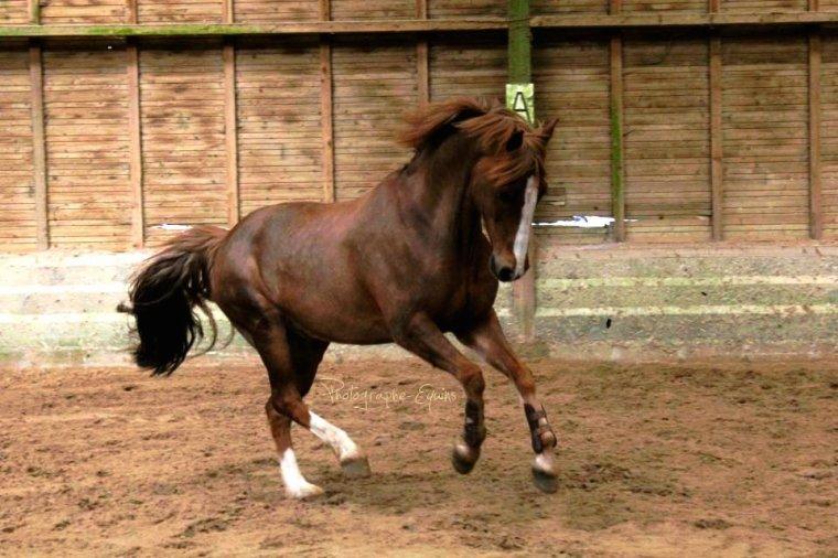 Le cheval la plus belle créature du monde..