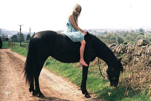 La confiance est le pilier de l'équitation.