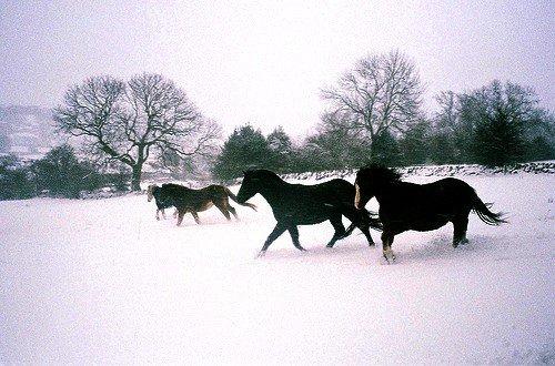 La liberté en hiver.