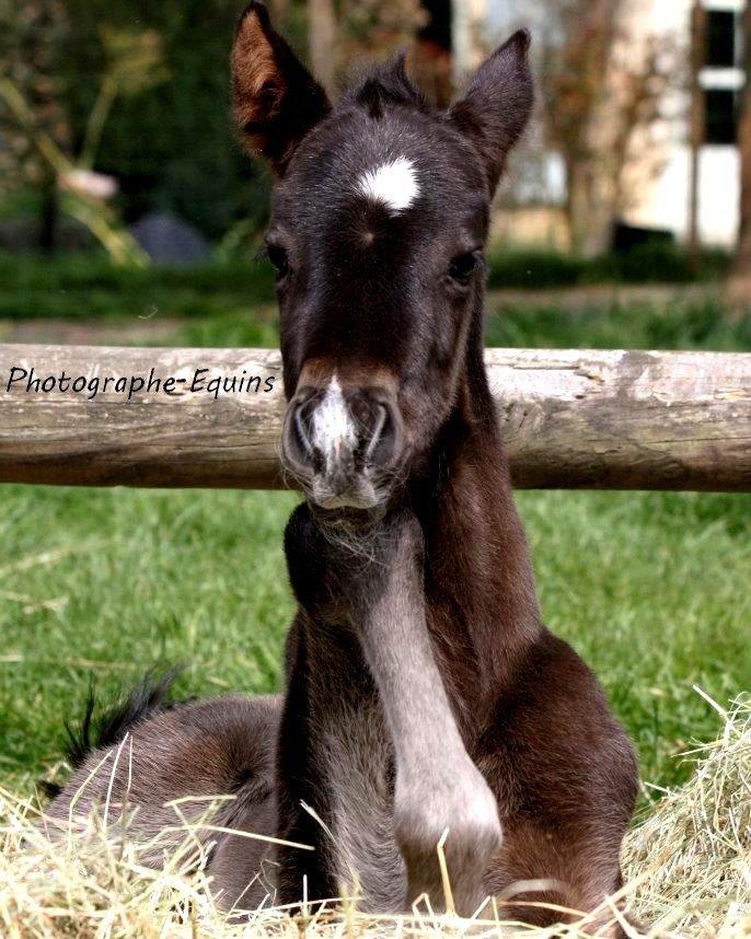 La beauté du cheval est si précieuse..