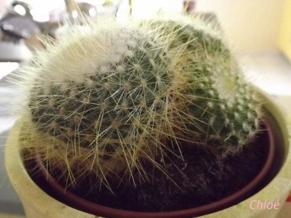 Encore un cactus!!