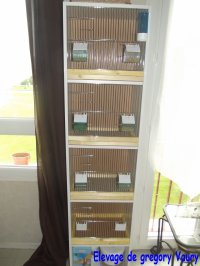 Mes Installations et preparation des cages