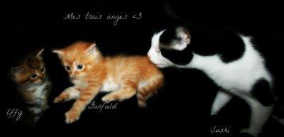 † Les nouveaux bébés de la maison ! ♥ [01.10.2012]
