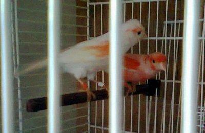 mon couple de l annè 2011(le male c le plus rouge)