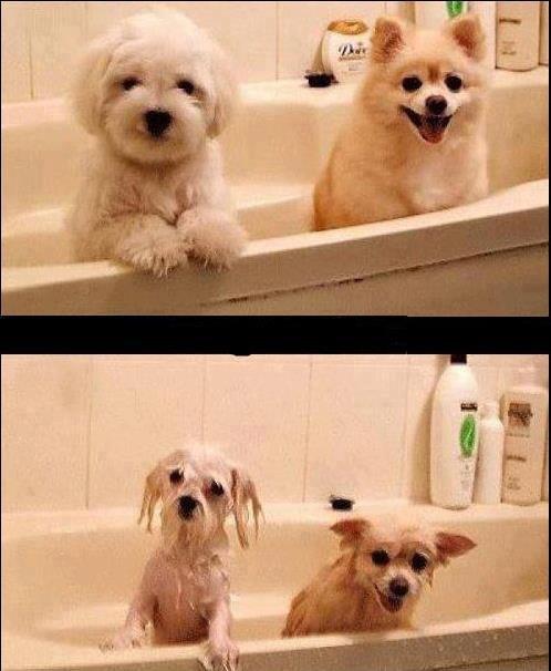 Le bain ou la piscine !