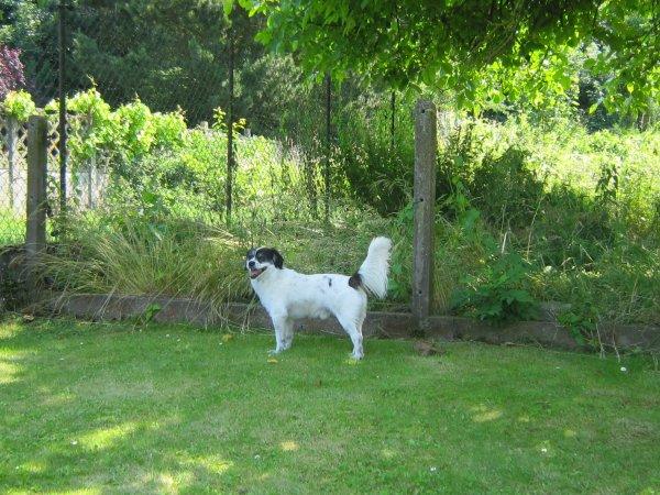 Diégo dans le jardin chez Nadège et Ben - 7 juillet 2013