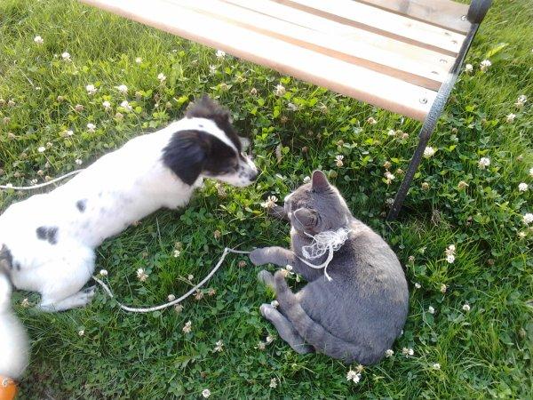Diégo et le chat