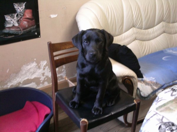 TOM, le chien de mon ami Peterpan