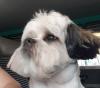 Jasper, le chien d'une amie country Anne Marie