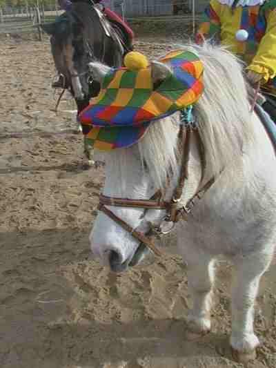 même les poneys sont déguisés