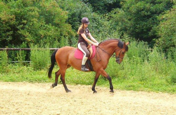 Quel que soit la taille, la beauté du cheval, sa restera toujours un animal extraordinaire ! ♥