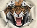 Photo de tigre-619