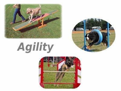 L'agility