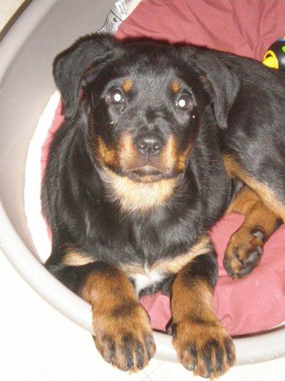 Elfy née le 7 octobre 2009