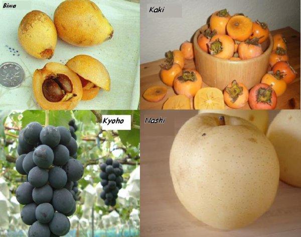 Les Frutis Japonais