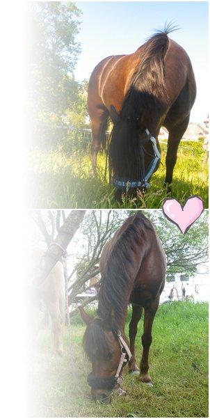 → Nos poneys en chocolat ♥