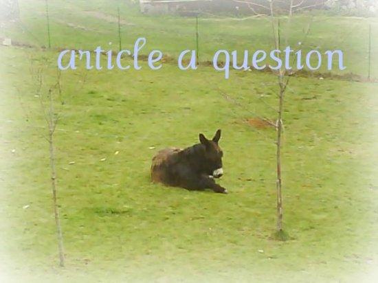 Article à questions /!\
