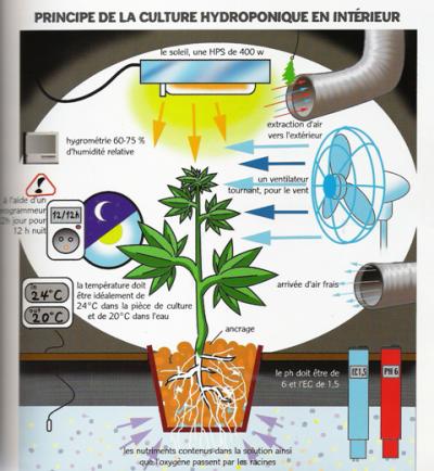 lampe 400watts et les besoin d'une plantes...