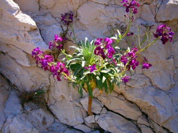 la decouverte de fleurs de provence ;)