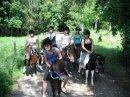 Photo de horse-----x3