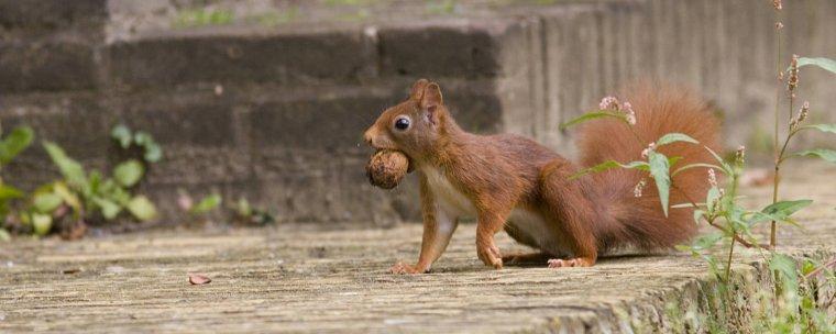 Sicile :  un bout d'horizon, cet ½il qui rougeoie en saison... Comment les écureuils plantent des arbres...